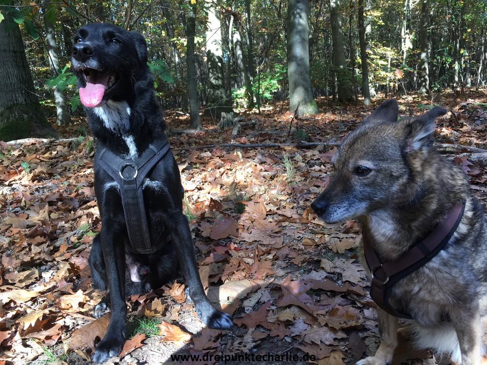 Die Beiden im Wald
