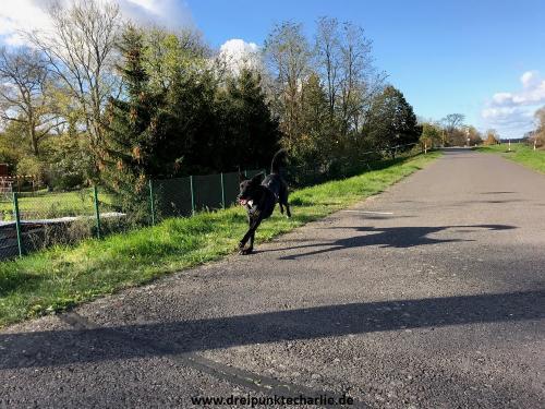jump_and_run