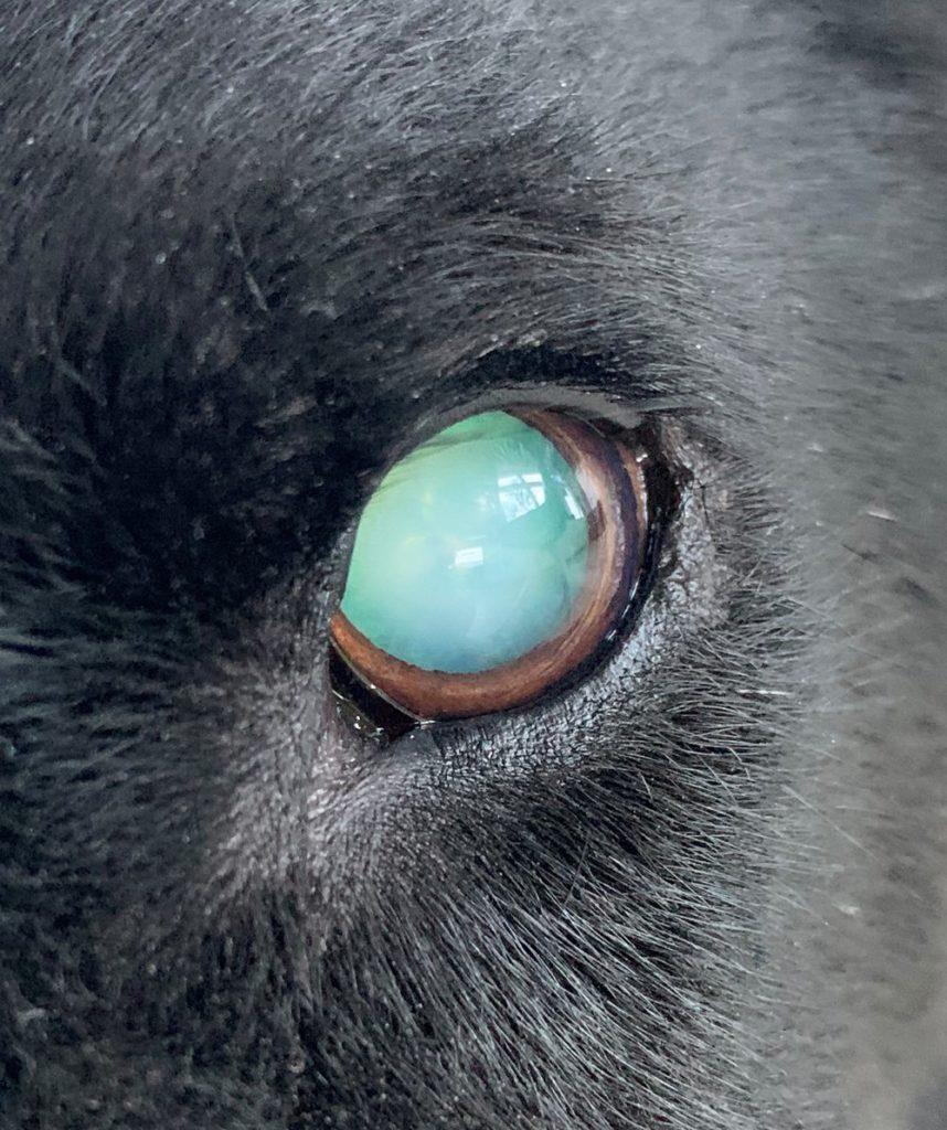 Charlies getrübtes Auge