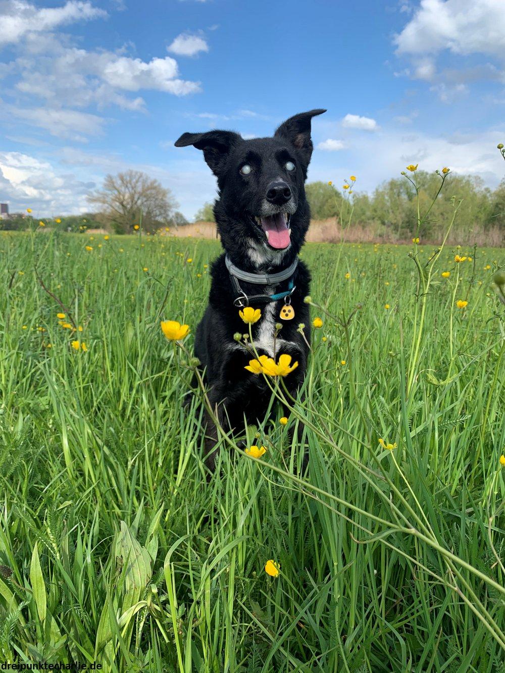 Charlie sitzt im Gras