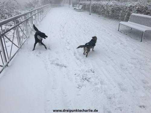 Schnee3